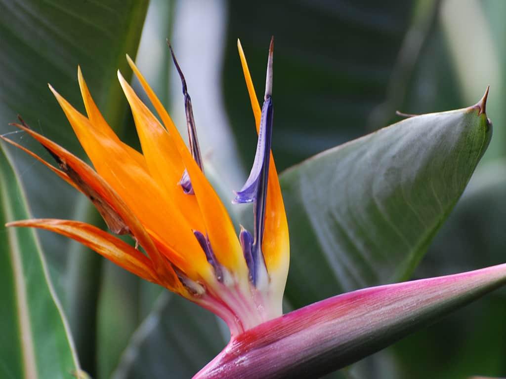 Ferienwohnung Casa Blanco auf Teneriffa - Pflanzenvielfalt auf Teneriffa